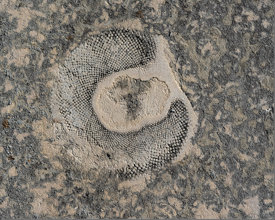 Fossil Embedded in Stone at St. Andrews on the Red